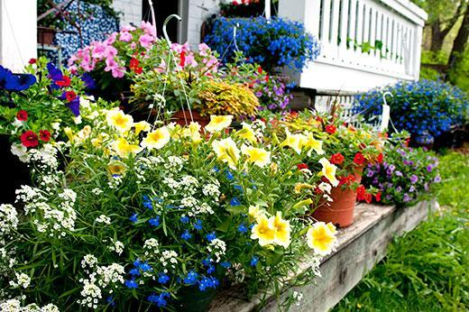 Flowers in Garden Bed